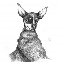 rysunek ołówkiem, rysunek zwierzaka, rysunek psa, kurs rysunku kraków, kurs rysunku wieliczka