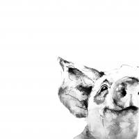 szkic, rysunek ołówkiem, rysunek zwierzaka, kurs rysunku kraków, kurs rysunku wieliczka